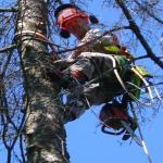 Tree Reaper's Photo