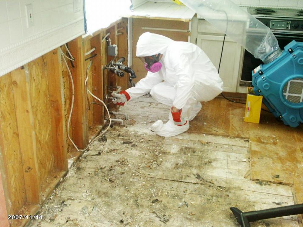 mold-remediation (1).jpeg