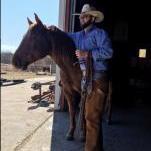 Davis Livestock
