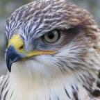 falcon45