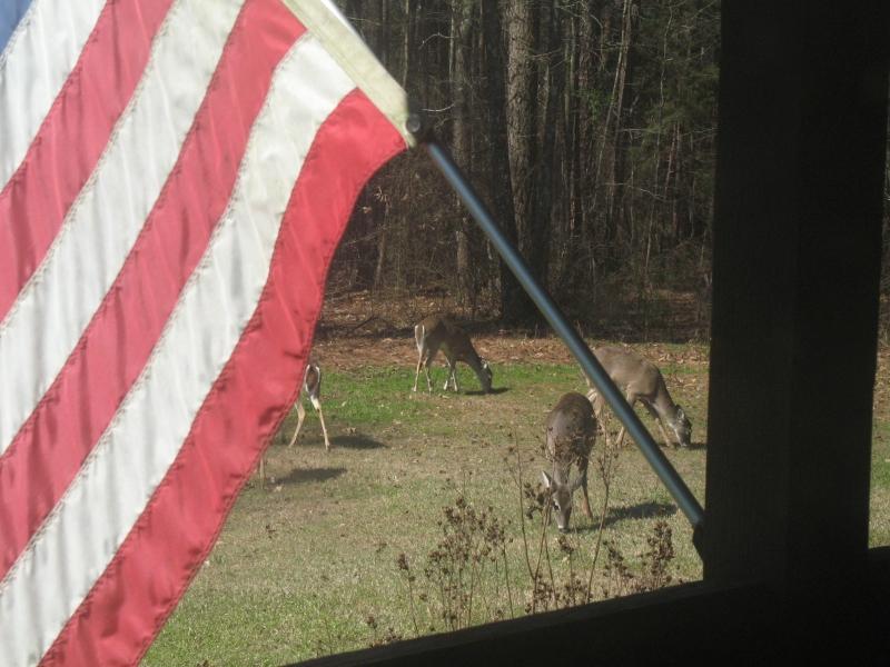 Deer Flag.jpg