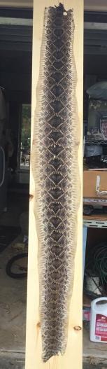 snake board.jpeg