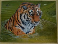 Tiger & water