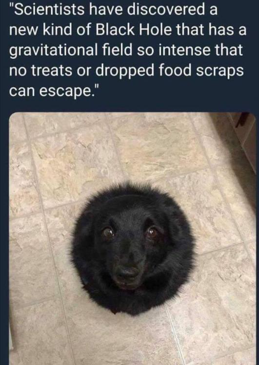 Black hole for treats.jpg