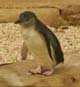 penguineer