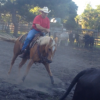 Consistent Cuts? Having A H... - last post by Equiplay Saddlery
