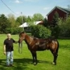 Shirley Brown Saddlery - last post by BondoBobCustomSaddles